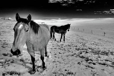 Photograph - Geldings On The Palouse by David Patterson