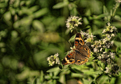 Photograph - General Butterfly by Rick Friedle