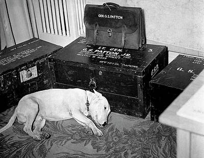 Outerspace Patenets Rights Managed Images - General George  Pattons dog on the day of Pattons death  December 21 1945 Royalty-Free Image by David Lee Guss
