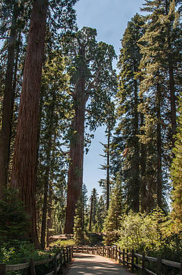 General Grant Tree Kings Canyon National Park Art Print