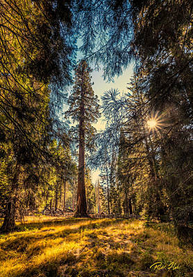 Photograph - General Sherman  by Rikk Flohr