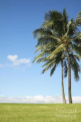 Generic Palm Tree Art Print
