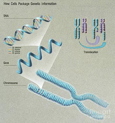 Genetic Fingerprints For Cancer Art Print by Science Source