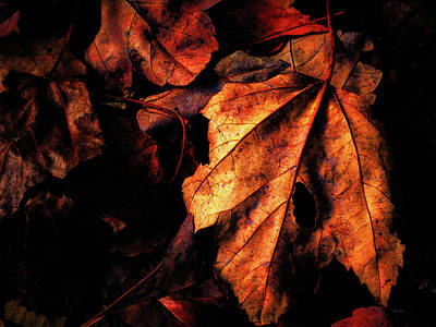 Photograph - Gentle Autumn by Bob Orsillo
