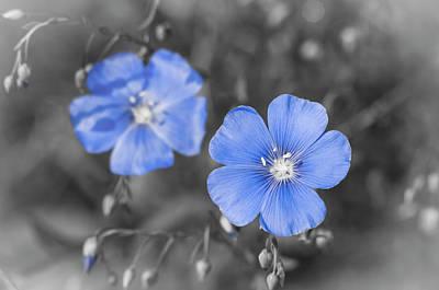 Blue Flower Photograph - Gentle Blue Flower by Konstantin Sevostyanov