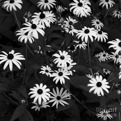 Photograph - Gentle Breeze by Patrick M Lynch