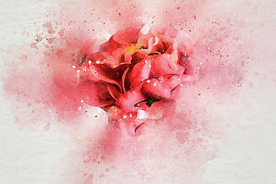 Camellia Photograph - Gentle Camellia by Kay Brewer