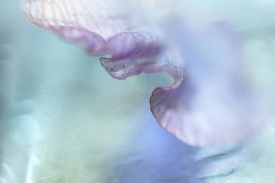 Photograph - Gentle Curves. Iris Macro by Jenny Rainbow