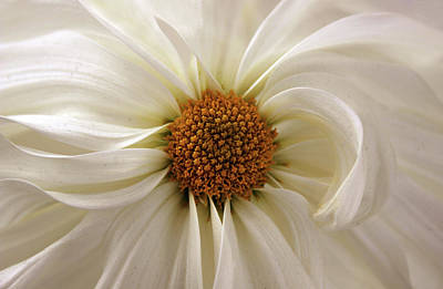Detail Floral Photograph - Gentle Curves by Jessica Jenney