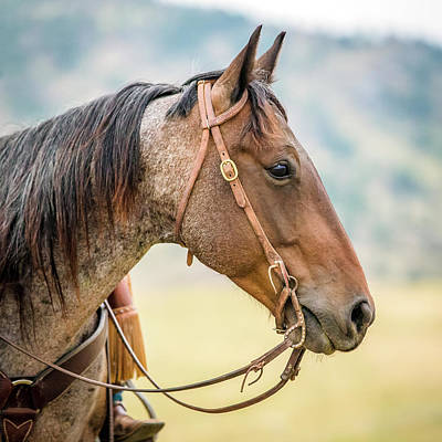 Photograph - Gentle Eye by Fast Horse Photography