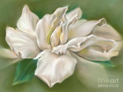 Pastel - Gentle Gardenia by MM Anderson