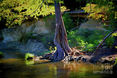 Photograph - Gentle Giant 122317-1 by Ray Shrewsberry