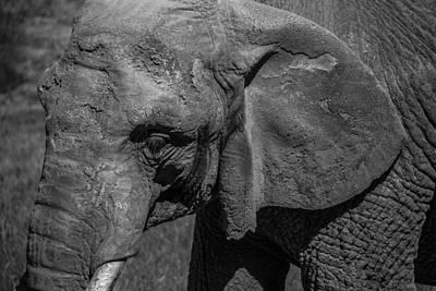 Photograph - Gentle Giant by Stewart Scott