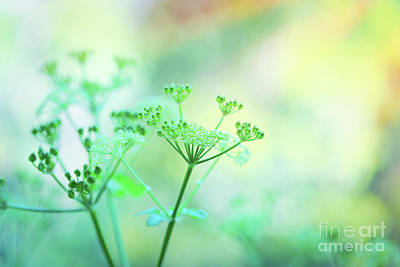 Photograph - Gentle Green Flowers by Anna Om