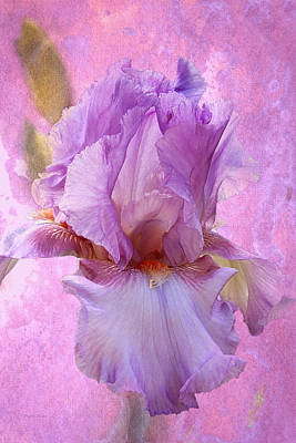 Photograph - Gentle Lavender Iris by Phyllis Denton