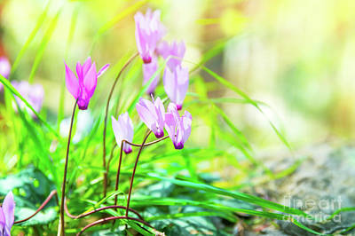 Photograph - Gentle Pink Wildflowers by Anna Om