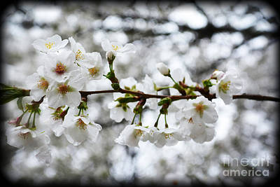 Photograph - Gentle Purity by Eva Thomas
