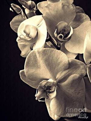 Photograph - Gentle Silence Sepia by Sarah Loft