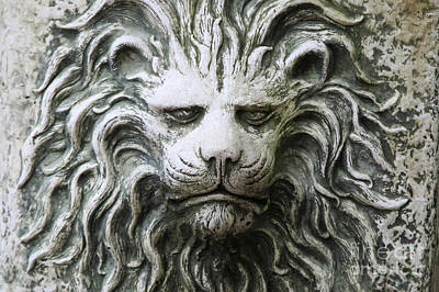 Photograph - Gentle Stone Lion by Heather Green