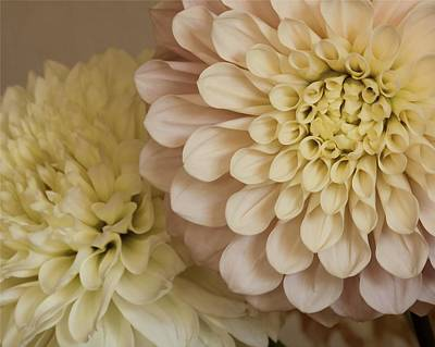 Photograph - Gentled By Dahlias by I'ina Van Lawick