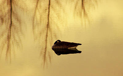 Mark Wagner Wall Art - Photograph - Gently Asleep by Mark Wagner