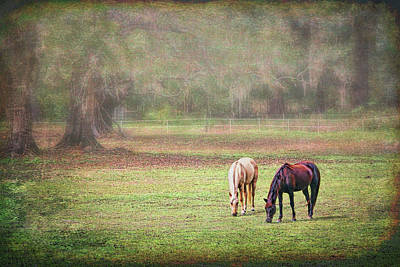 Photograph - Gently Grazing by Lewis Mann