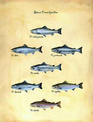 Trout Painting - Genus Oncorhynchus by Logan Parsons