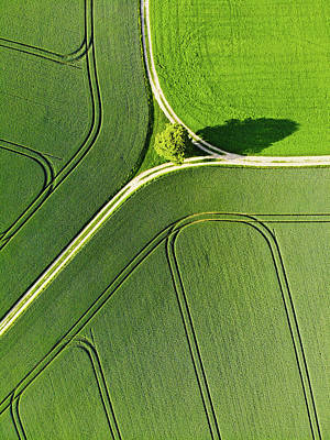 Photograph - Geometric Landscape 05b Tree And Green Fields Aerial View by Matthias Hauser