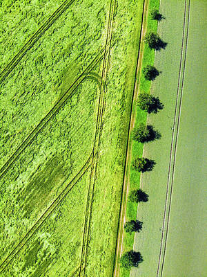 Photograph - Geometric Landscape 09 Trees And Fields Aerial by Matthias Hauser
