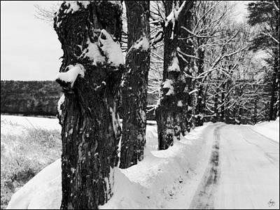 Photograph - George Road Winter Monochrome by Wayne King
