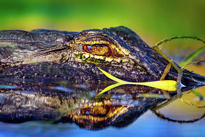 Photograph - George The Alligator by Mark Andrew Thomas