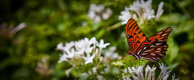 Georgia Plantation Photograph - Georgia Butterfly by Patrick  Flynn