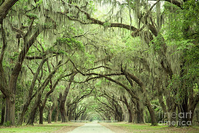 Photograph - Georgia Oak Alley by Heather Green