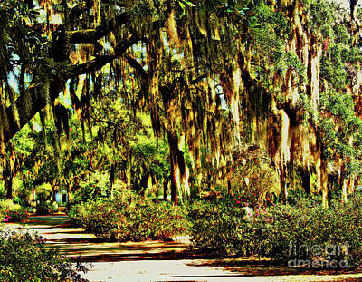 Photograph - Georgia's Moss Trail by Raymond Earley