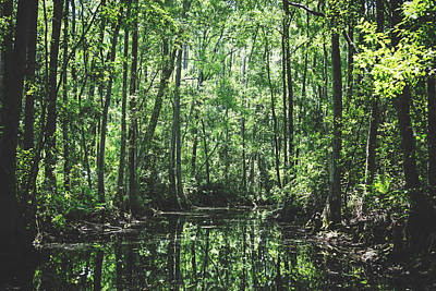 Photograph - Georgia's Okefenokee Swamp by Library Of Congress