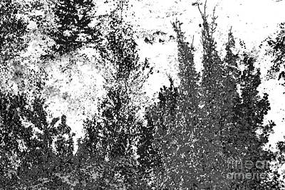 Photograph - Geotrees by Jesse Ciazza
