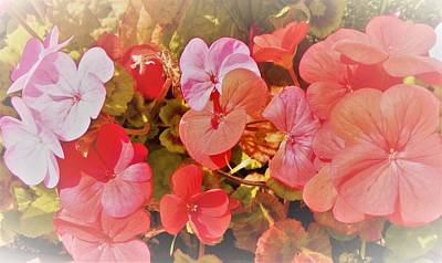 Geranium Art Print by Ann Johndro-Collins
