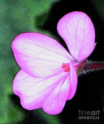 Painting - Geranium Blossom by Hazel Holland