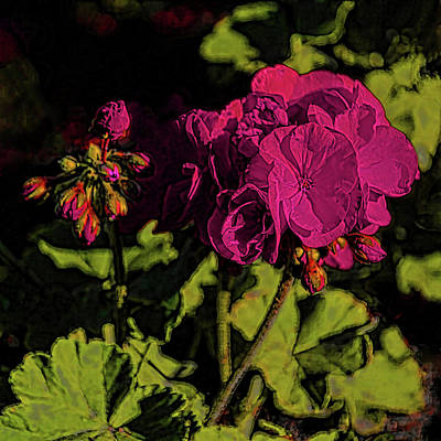 Photograph - Geranium Floral Art by HH Photography of Florida