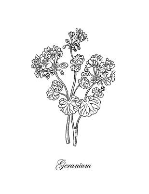 Floral Drawings - Geranium Flower Botanical Drawing  by Irina Sztukowski
