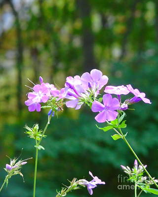 Photograph - Geranium In Fall by Susan Lafleur