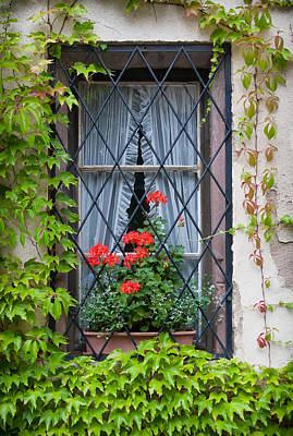 Photograph - Red Flowers In Window Box by Jenny Setchell