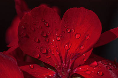 Photograph - Geranium Love by Janet Jones