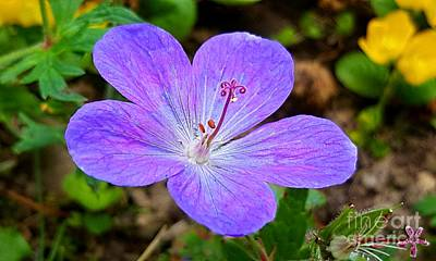 Photograph - Geranium by Michael Graham