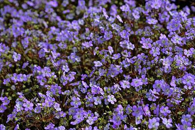 Photograph - Geranium Mosaic by Tim Good