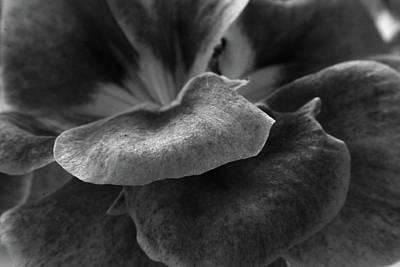Photograph - Geranium Petal by Aidan Moran