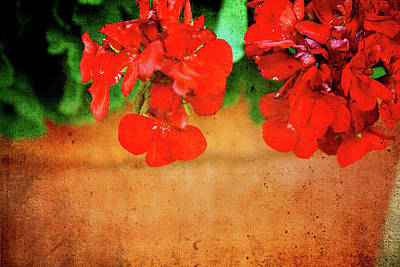 Geranium Summer Art Print by Toni Hopper