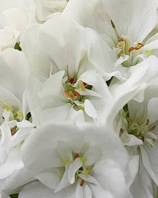 Geranium Wears White Art Print