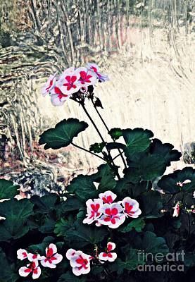 Geraniums And Old Glass  Art Print