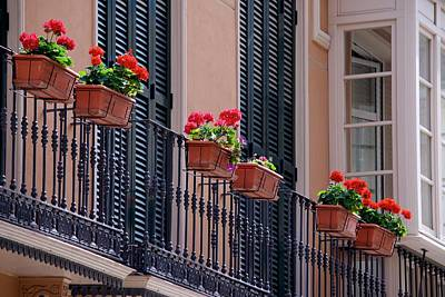 Photograph - Geraniums Diagonal by Eric Tressler